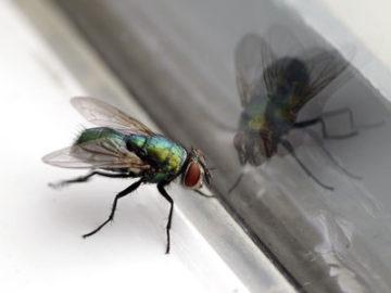 Fliegenschutz