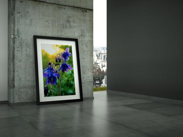 Bilder-dekorieren