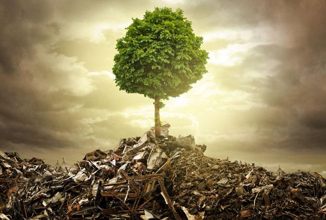 Umweltfreundliche Entsorgung schützt unsere Natur