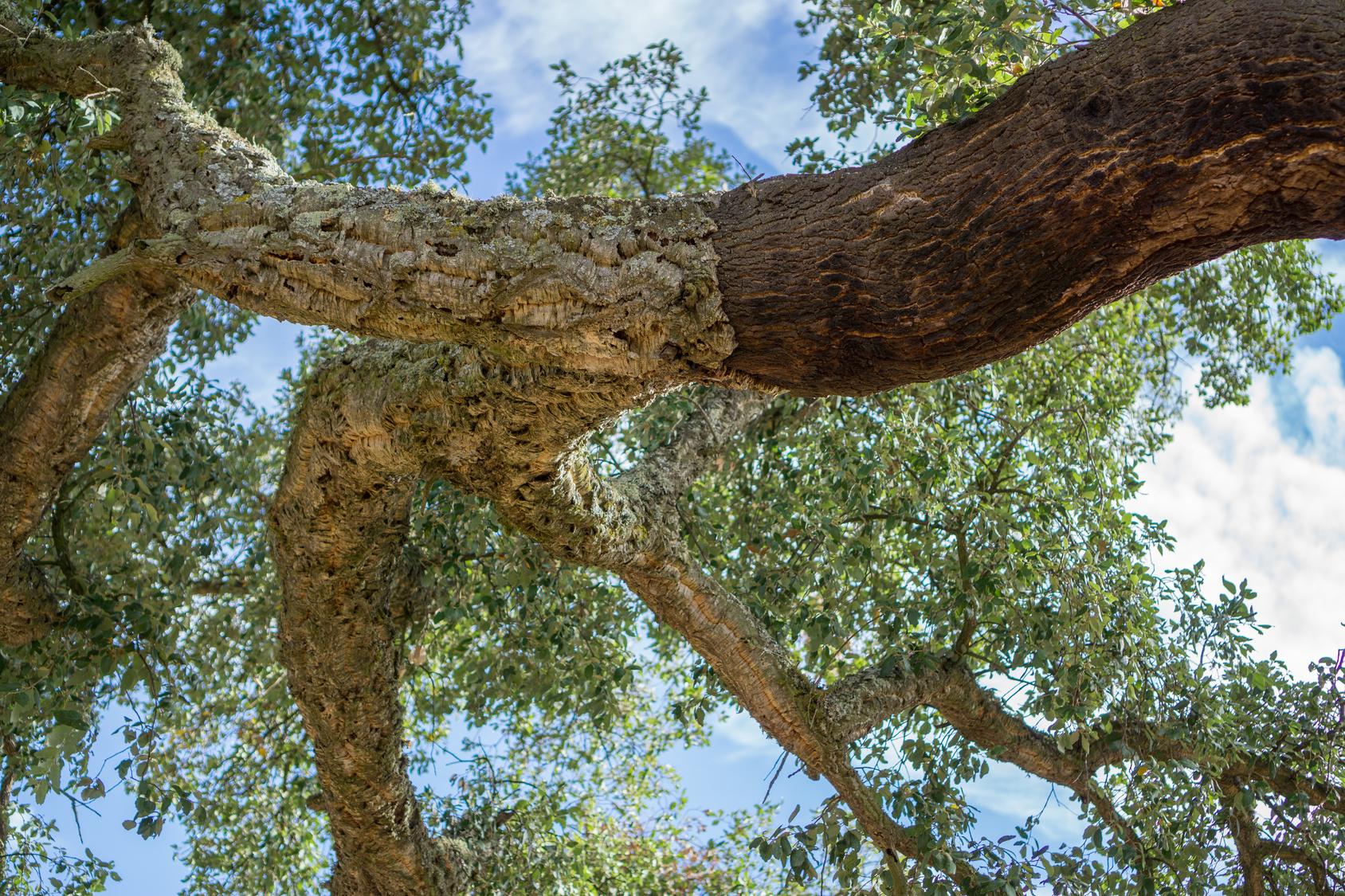Kork das Naturmaterial – für Dämmung und Bodenbelag