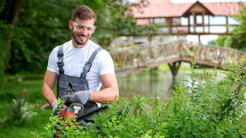 Gartenhecke pflanzen und pflegen: Worauf es ankommt