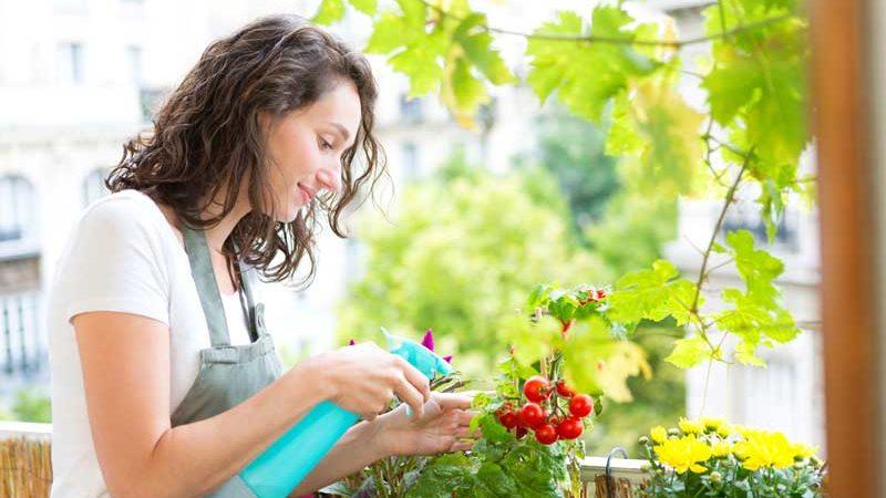 Tomaten pflanzen auf dem eigenen Balkon: So klappt's