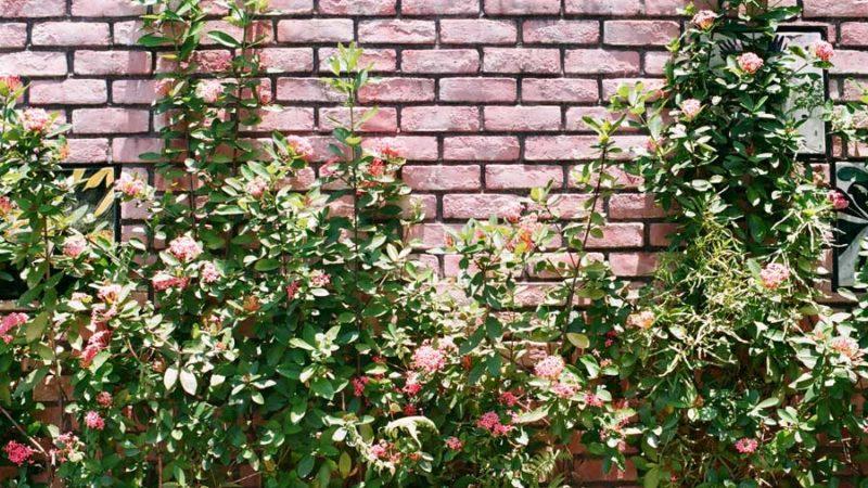 DIY-Gartenmauer – das müssen Sie beachten