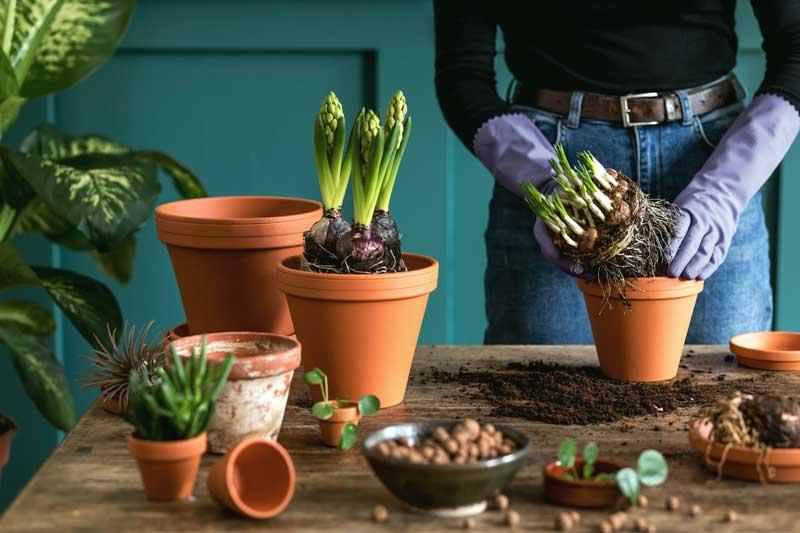 Alles was Sie über Pflanztische für den Garten wissen müssen